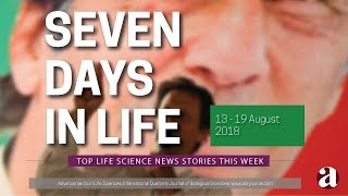 Seven Days in Life (13 - 19 August 2018)