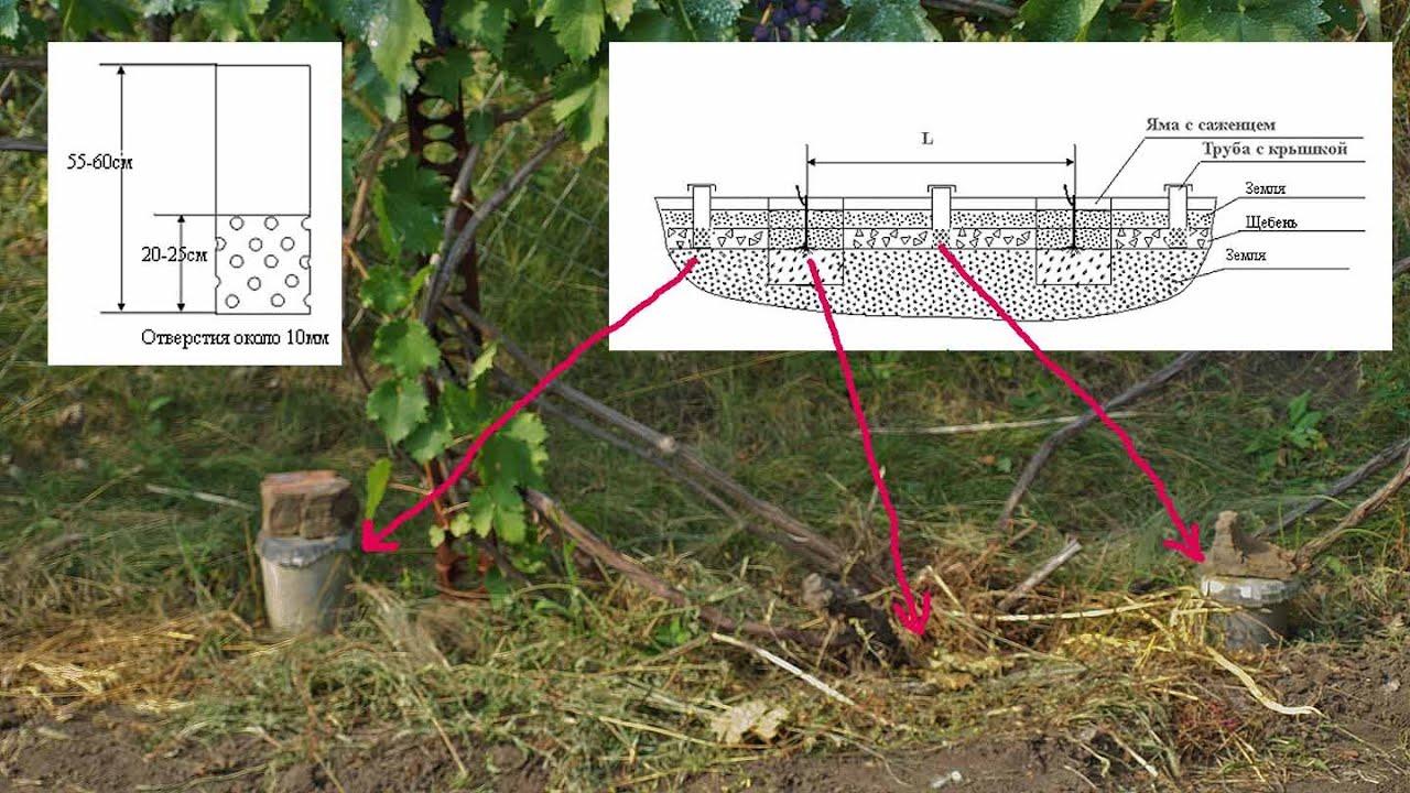 Капельный полив для винограда
