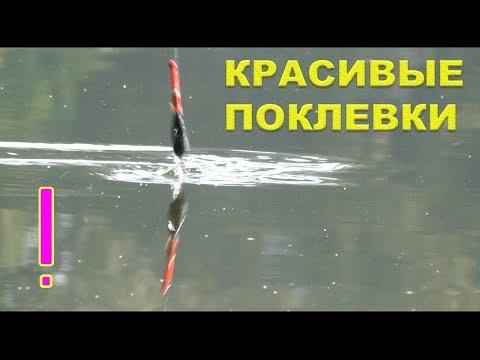 как ловить на поплавок в волге