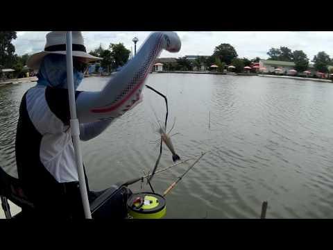 ตกปลาได้กุ้ง Fishing (18)