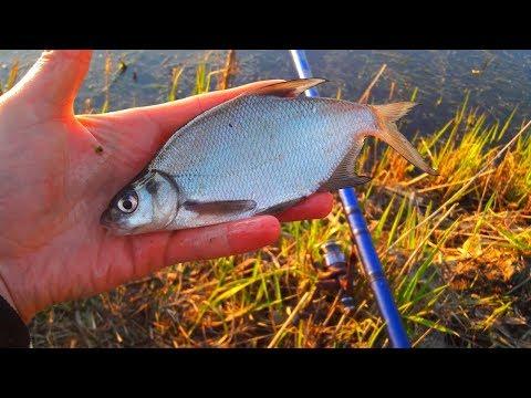 Рыбалка в огороде)) Ловля плотвы на реке Уды