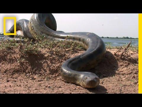 5 Grown Men Vs. 1 Big Snake