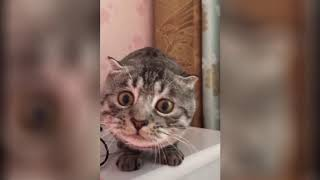 Cute funny animals - video 06