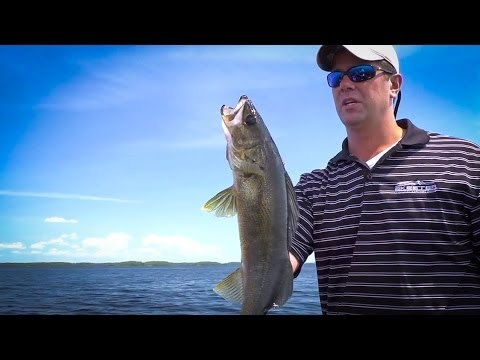 Mayfly Hatch Tactics Rainy Lake Minnesota Walleye Fishing