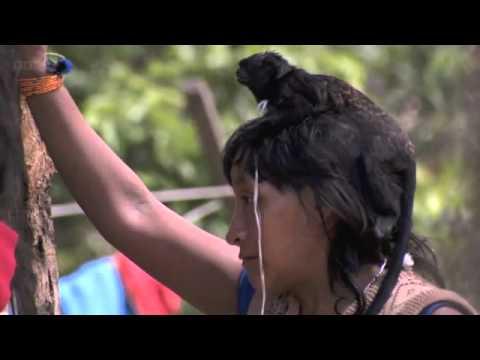 Breastfeeding Monkeys: Human Planet - Jungles video