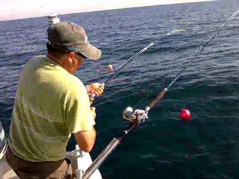Corvina de 9 kilos pescando al vivo