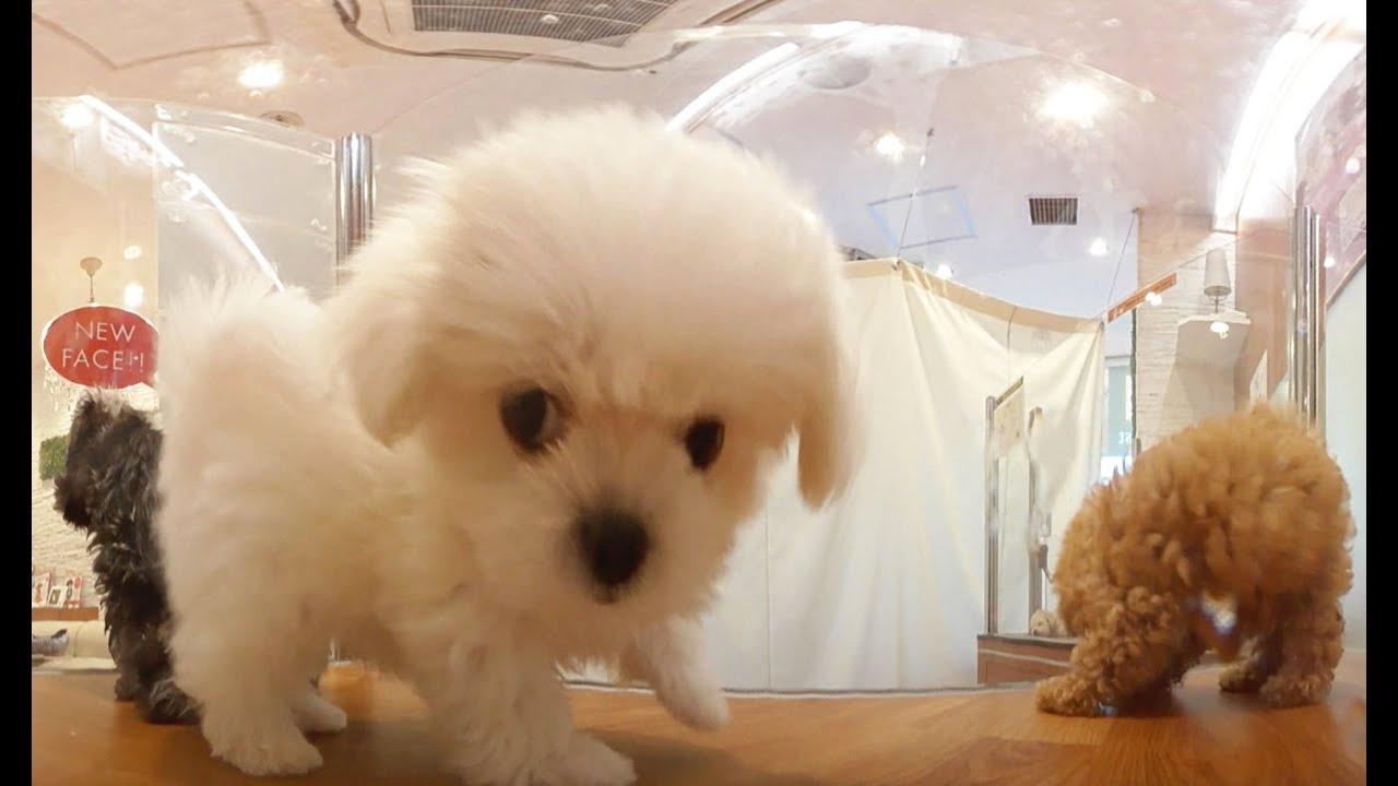 360°Dog 子犬360° @pet shop