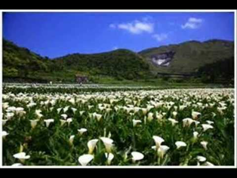 1000 Flowers Will Bloom. video