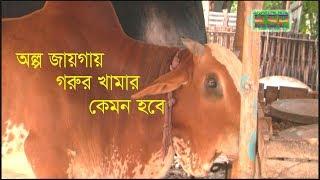 অল্প জায়গায় গরুর খামার   Cattle Farm in a small place