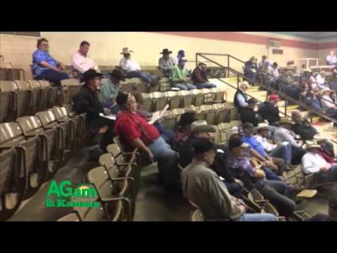 Farm Factor - Salina Livestock Auction - Nov. 24, 2015