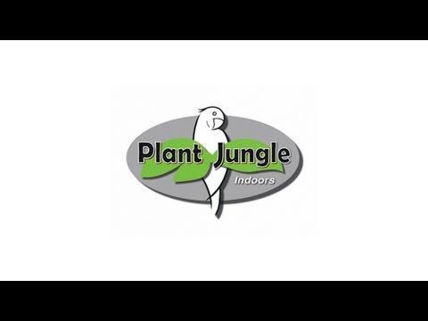 Plant Jungle