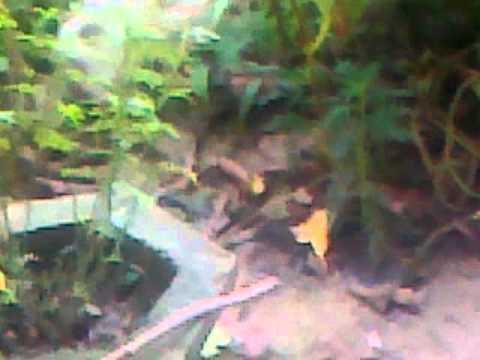 Bheegi Billi video