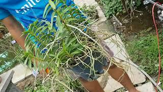 Cù Lao Minh rừng 12.6.18 lh 0908846804