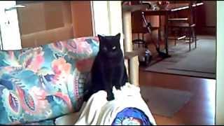 Drum Cat - Trommelnde Katze :)