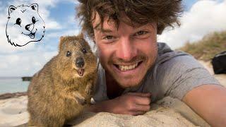 Quokka Selfie Tutorial - How to take Animal Selfies - Ultimate Guide