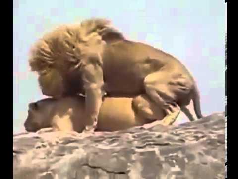 Характеристика мужчины-Льва в постели, любви и отношениях
