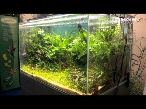 Aquascaping - Aquarium Ideas from Aquatics Live 2012, part 3