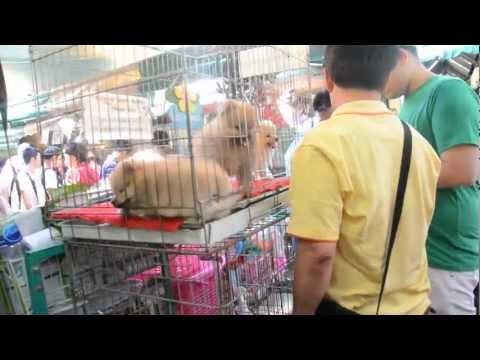 Thailand Bangkok market – Animal Section