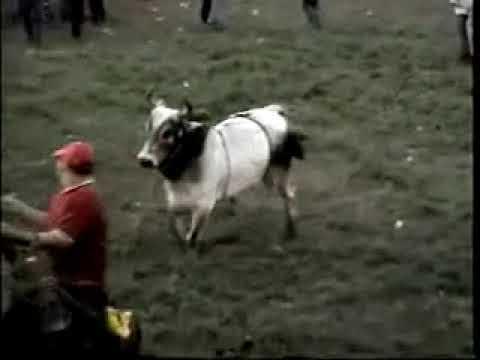 Bucking bulls / Bull Riding - Nicaragua (Sn Pedro Chontales)