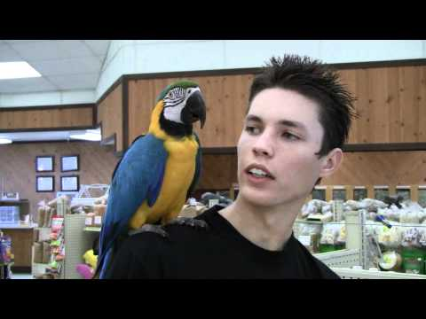 Kaiu The Blue & Gold Macaw