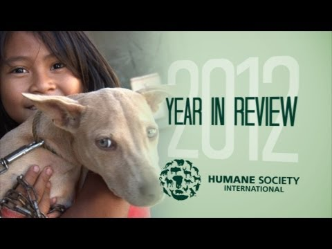 Humane Society International Year in Review 2012