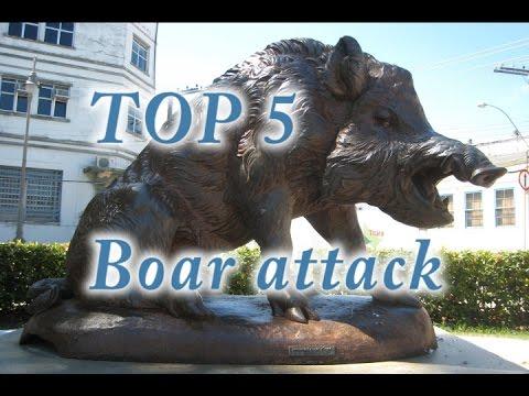 Top 5 attacchi da cinghiali