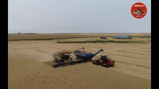Wheat Harvest 2018 near Bottineau North Dakota