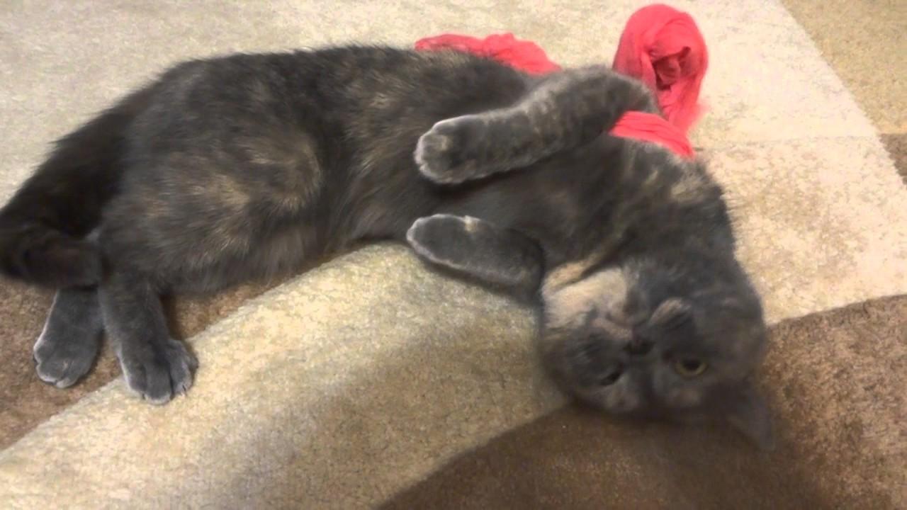 Орет кошка что делать в домашних условиях 698