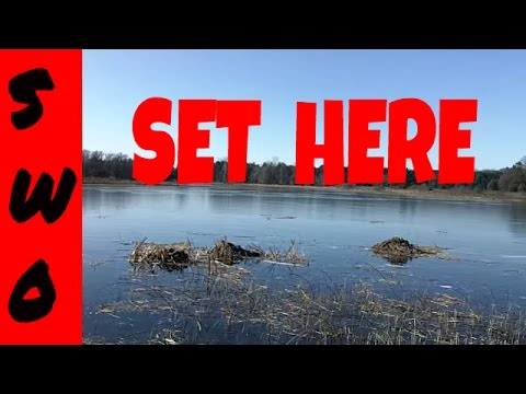Under Ice Muskrat Trapping Part 1 (Location)