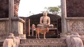 In Buddha's Presence / 30secs/ Rayonner Films Sri Lanka 2013