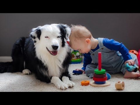 Border Collie Playing with Baby Child - Funny Videos of Dog and Baby