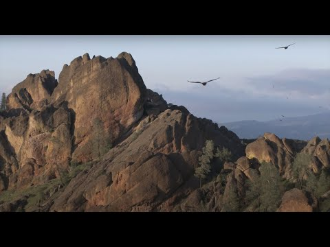 Flight of the Condors: Hain Wilderness, Pinnacles National Park