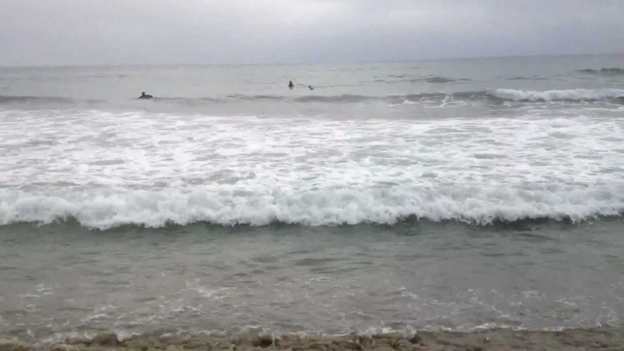 Surf fishing for leopard sharks in san diego youtube for Surf fishing for sharks