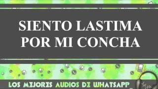 Siento Lastima Por Mi Concha - Conversaciones De Whatsapp - Los Mejores Audios Y Videos Whatsapp