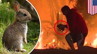 Rabbit rescue: Hero runs into burning bush to rescue wild bunny from California wildfire - TomoNews
