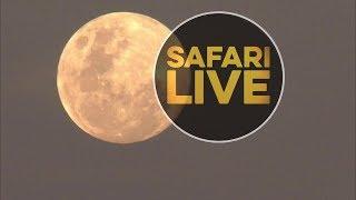 safariLIVE - Sunset Safari - June 16, 2019