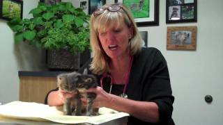 What to do with abandoned kittens!.mp4