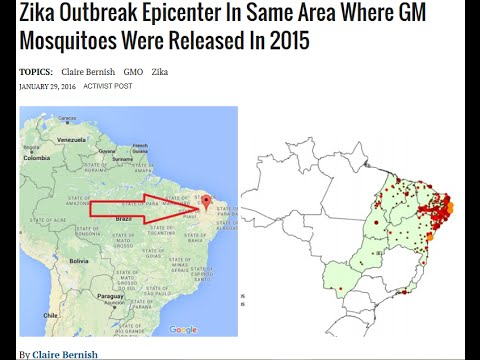 Zika Outbreak Epicenter In Same Area Where GM Mosquitoes Were Released in 2015