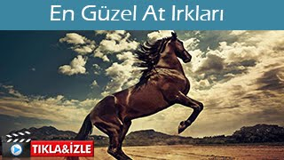 En Güzel 10 At Irkı (The 10 Most Beautiful And Rare Horses In The World)