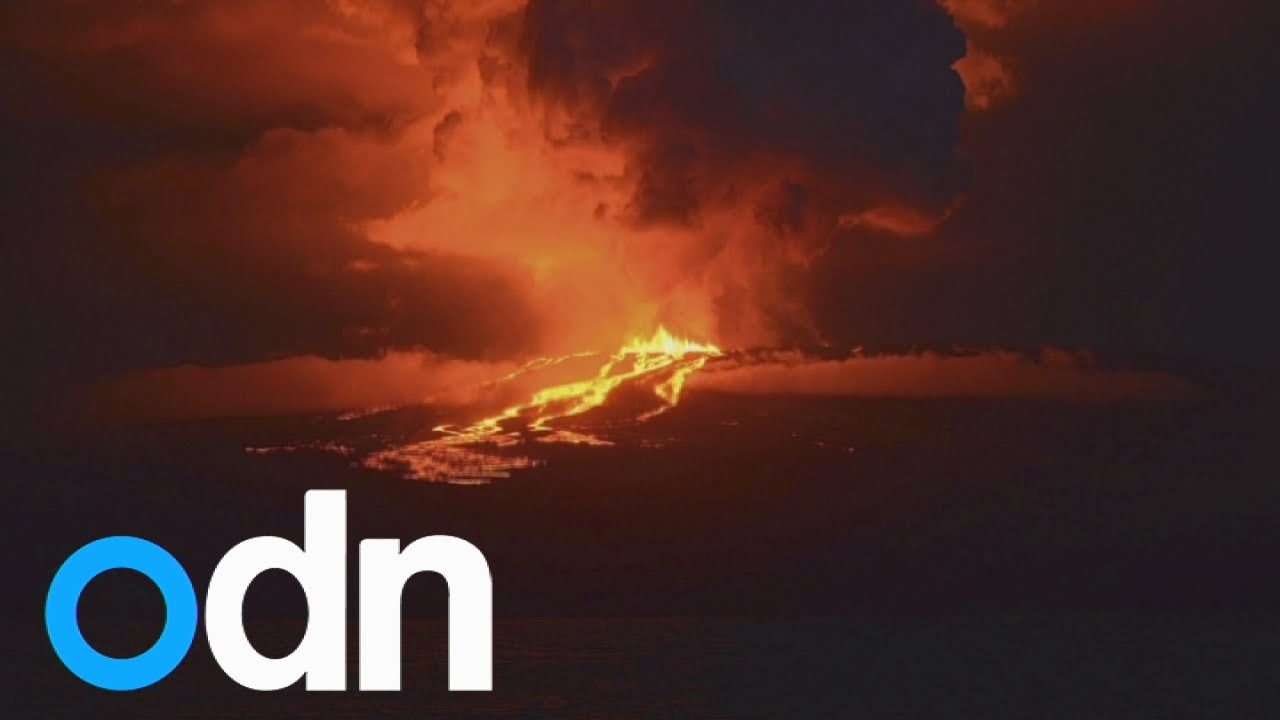 Volcano on Galapagos Island home to unique pink iguanas starts erupting