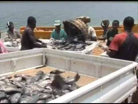 Fish Farming In Ghana  Development Challenges