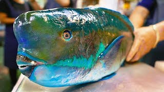 Japan Street Food - GIANT HUMPHEAD PARROTFISH Sashimi Okinawa Japanese