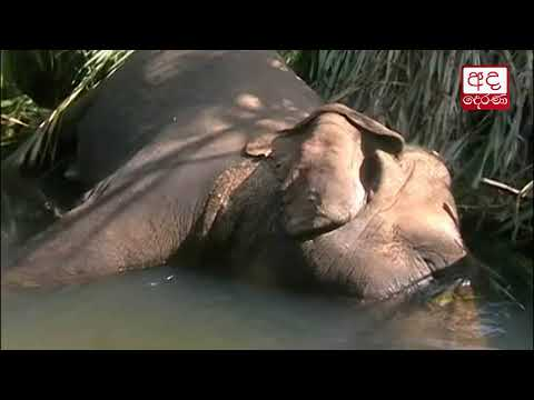 another wild elephan|eng