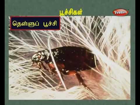 பூச்சிகள் (insects)    மிருங்களின் ஒலிகள் (cries Of Creatures )   Tamil Nursery Lessons For Kids video