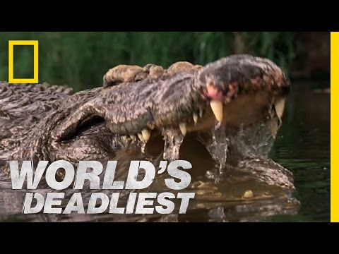 Crocs Kill with Strongest Bite | World's Deadliest