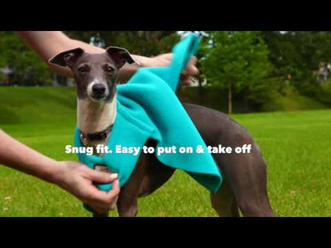 Take the Chill Away with a Warm Dog Vest   DogCoats.com