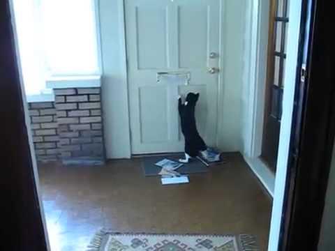 Кот ненавидит почту!