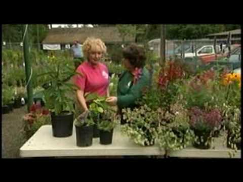 Great Gardens: Manito Park Plant Sale