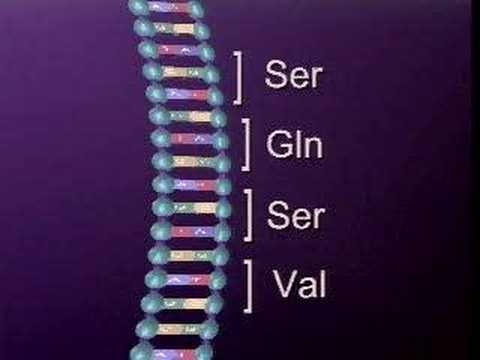 DNA MUTATION