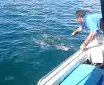 Brunei fishing youtube for Fishing license for disabled person